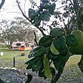 第12露 東風休閒農場露營區