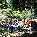 第117露 張家堡森林梅園