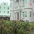 聖帕颱風過後的花園