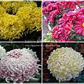 2009印象花博‧共香盛菊