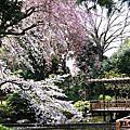 Travel - 2008 東京春遊