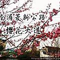 【浙江湖州─旅遊】菱新公路櫻花大道