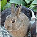 兔醬回憶錄