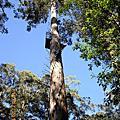 pemberton爬大樹...