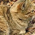 2009-12-31 貓