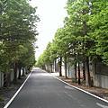 20140420 水圳單車道 & 落羽松密徑