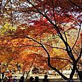 201411韓國賞楓之旅