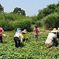 2011小小農夫體驗營第二梯次8月3日紀錄