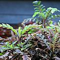 2013水草種植