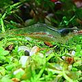 魚蝦螺養殖