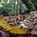 寒風枯葉落