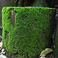 苔痕上階綠草色入簾青
