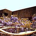 2014紫藤花--宜蘭縣議會