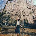 ●201503,追逐櫻花京都之旅