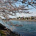 2011.4.7關西:京都御院、伏見稻荷、宇治