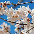 2011.4月關西京阪賞櫻之旅