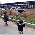 103年走春之二乳牛的家&台灣歷史博物館