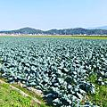 2014糸島芸農芸術祭