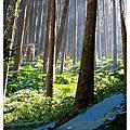 【作客他鄉】塔山下永遠的部落–來吉Pnguu