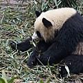 成都美食與熊貓基地