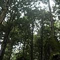 茂興_蕨類原生園2009.10.31