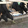 台九線之旅_初鹿農場2009.11