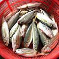 香山海山漁港2010_0328