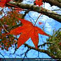 2010-12-05 楓紅大雪山+豐原廟東夜市