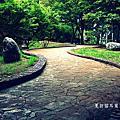 2012-07-21 夏訪貓耳葉菊。福壽山農場