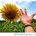 2011-01-02 花東花海行:花蓮篇 (六十石山+富里花海)