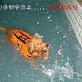05.03樂狗游泳