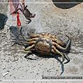 20080713宜蘭螃蟹