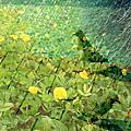 影像重疊創作030 ---鳥之愛系列創作(五) 春光料峭