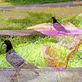 影像重疊創作  060 --- 花與鳥