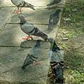 影像重疊創作  064 --- 鳥