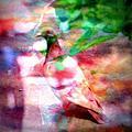 影像重疊創作  070 --- 花與鳥