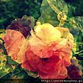 影像重疊創作 076 --- 2012士林官邸玫瑰花