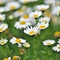 2011年4月10日桃園春天農場(Nikkor 105mm微距鏡的威力 )