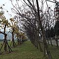 台北大學校園美景