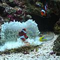 20090520魚缸