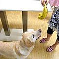 高齡犬照顧 - 大寶水療之前到醫院拍X光!