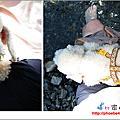 2010.9.22卡捲過中秋節