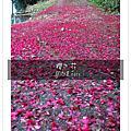 2009.2.8滿月圓森林遊樂區