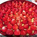 免烤版_草莓乳酪蛋糕