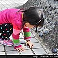 2012.02.12 櫻花盛開-新竹動物園