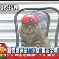寵物也保命! 小貓「戴安全帽」兜風