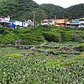 20110820  蘭嶼(紅頭,野銀,東清)