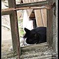 平溪線之旅-去侯硐看貓咪~~