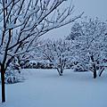 2006(冬)- 法國