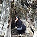 環島八天-忘憂森林